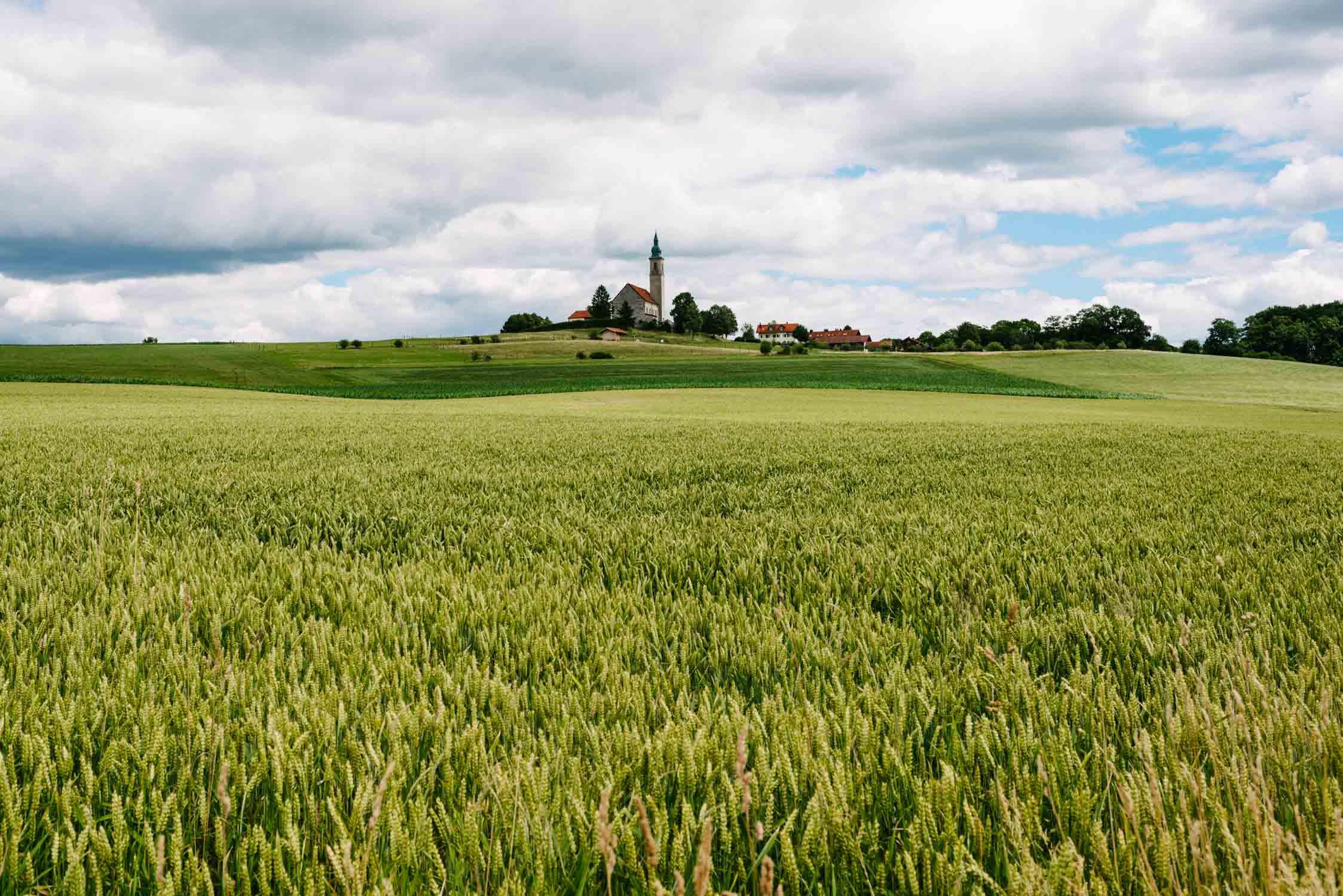 Blick von einem Kornfeld aus auf die Kirche Sankt Michael in Alxing.